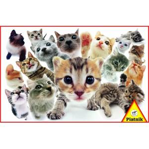 Hanadeka - Kočky